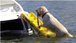 Badeleitern für Hunde BBN030