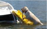 Badeleiter für Hunde BBN030