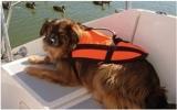Schwimmhilfen - Hundeschwimmhilfe bis 8Kg